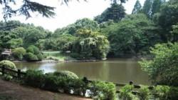 shinjuku-park-pond_5599551
